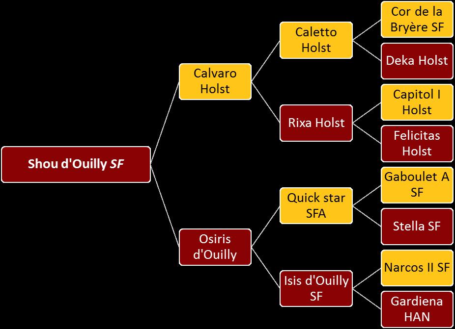 Shou d'Ouilly - Généalogie